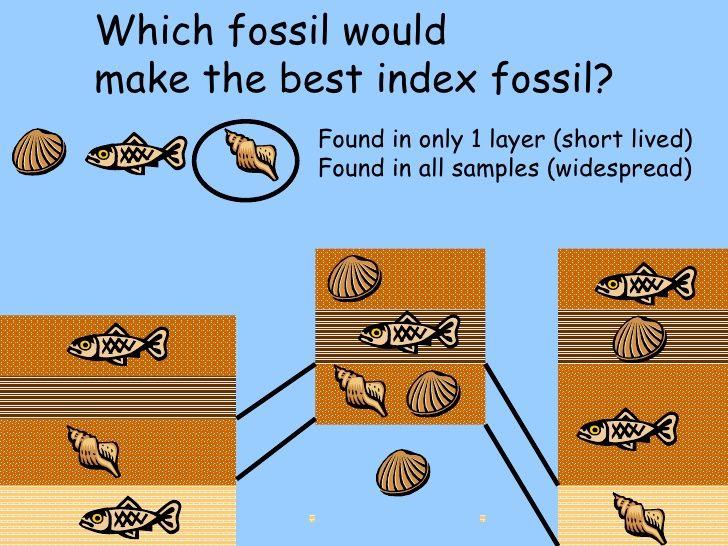 Image result for index fossil – Index Fossils Worksheet