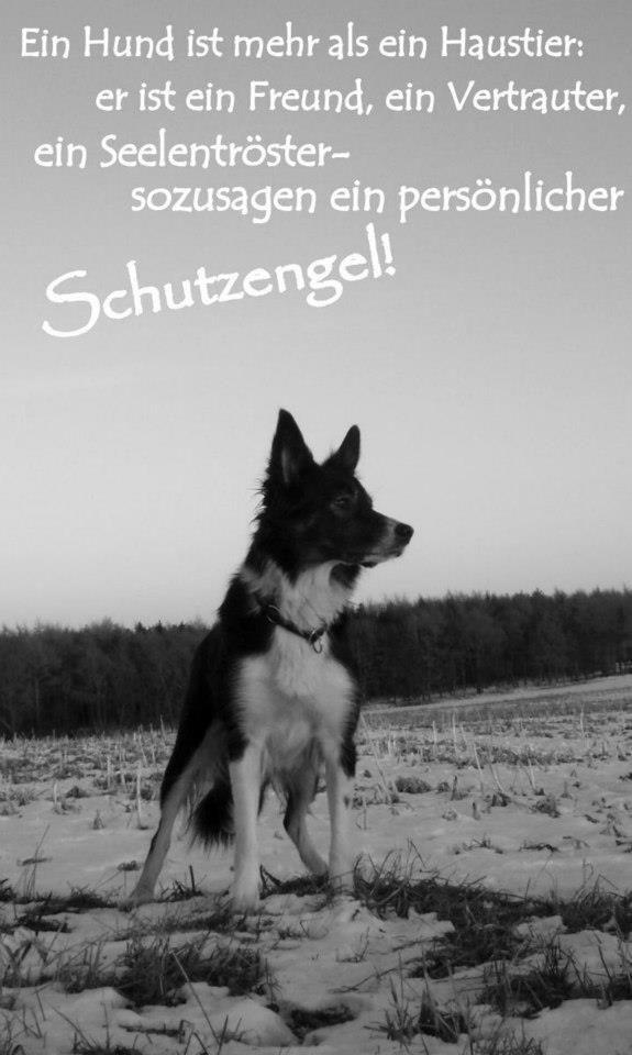 schutzengel hund youdids spr che hunde pinterest. Black Bedroom Furniture Sets. Home Design Ideas