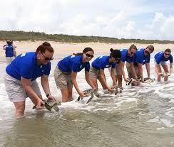 Stranded sea turtle release http://wp.me/p1GKzp-ME