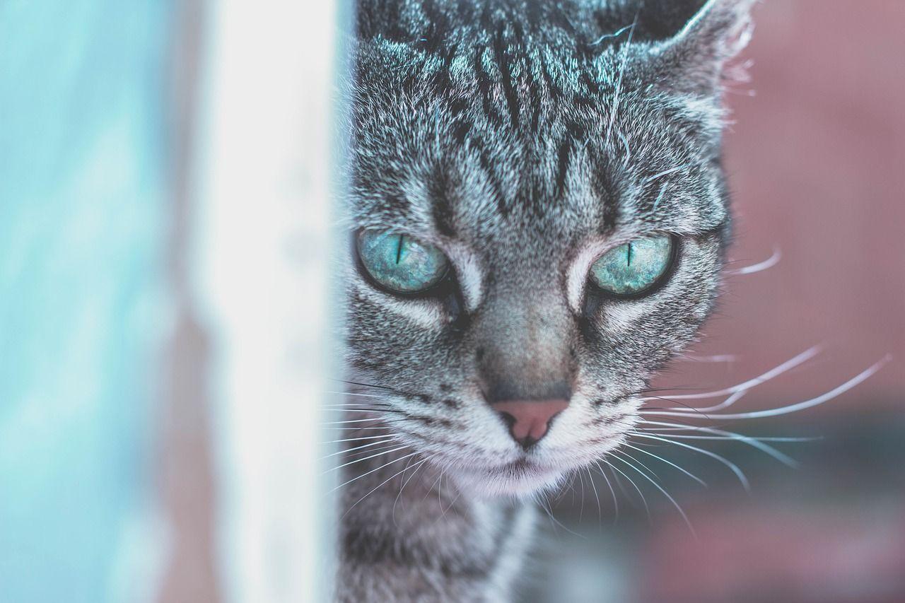 #Pet #Pets #Dog #Cats #PetLovers #PetClothes #PetAccessories #PetToys #PetGadgets #FAQ #PetzEmporium #Offers #HolidaySeason #HolidayOffers #CatOfTheDay #PicOfTheDay