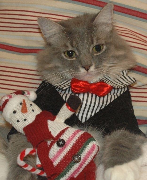 The eighteenth cat of Christmas...