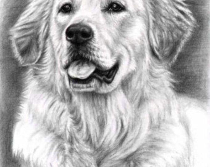 Golden Retriever Lamina A3 Dibujos De Perros Dibujos De