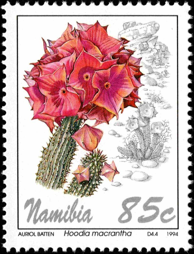 Stamp Hoodia Macrantha Namibia Flowers Mi Na 775 Sn Na 765 Yt Na 731 Post Stamp Mail Art Postal Stamps