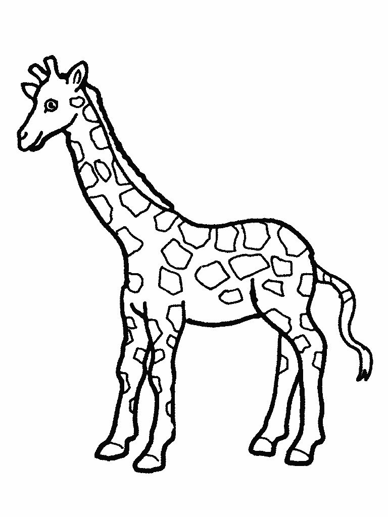 Free Printable Giraffe Coloring Pages For Kids Animal Coloring