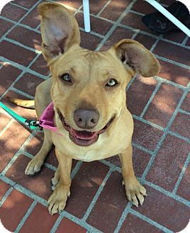 Pin on Dogs For Adoption in Los Angeles