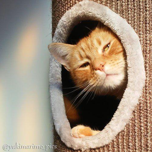 Orange Kitty https://threechattycats.com/2016/04/08/kitty-close-up-angel-in-the-netherlands/
