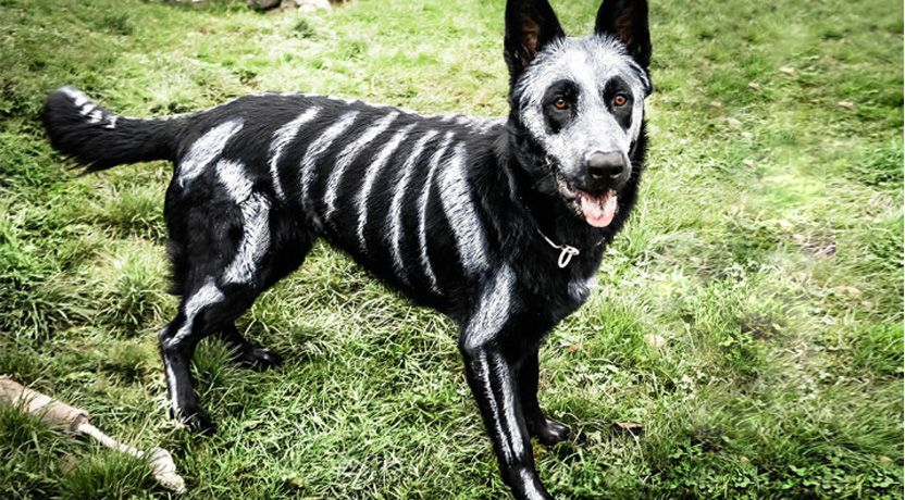 What's the Best Dog Halloween Costume of All Time? [Quiz
