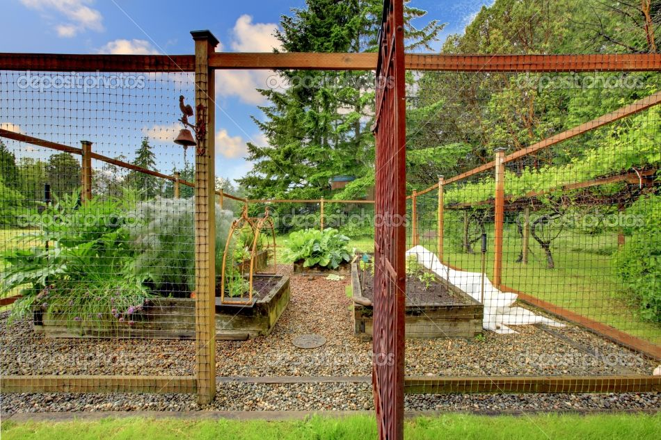 Stock Photography Of Vegetable Small Fenced Garden   Beautiful Summer  Vegetable.   Search Stock Photos, Pictures, Images, And Photo Clipart