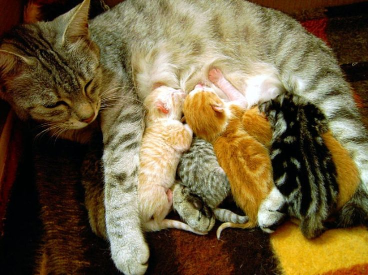 Cats Purr When They Are Feeding Their Kittens But Why Do Cats