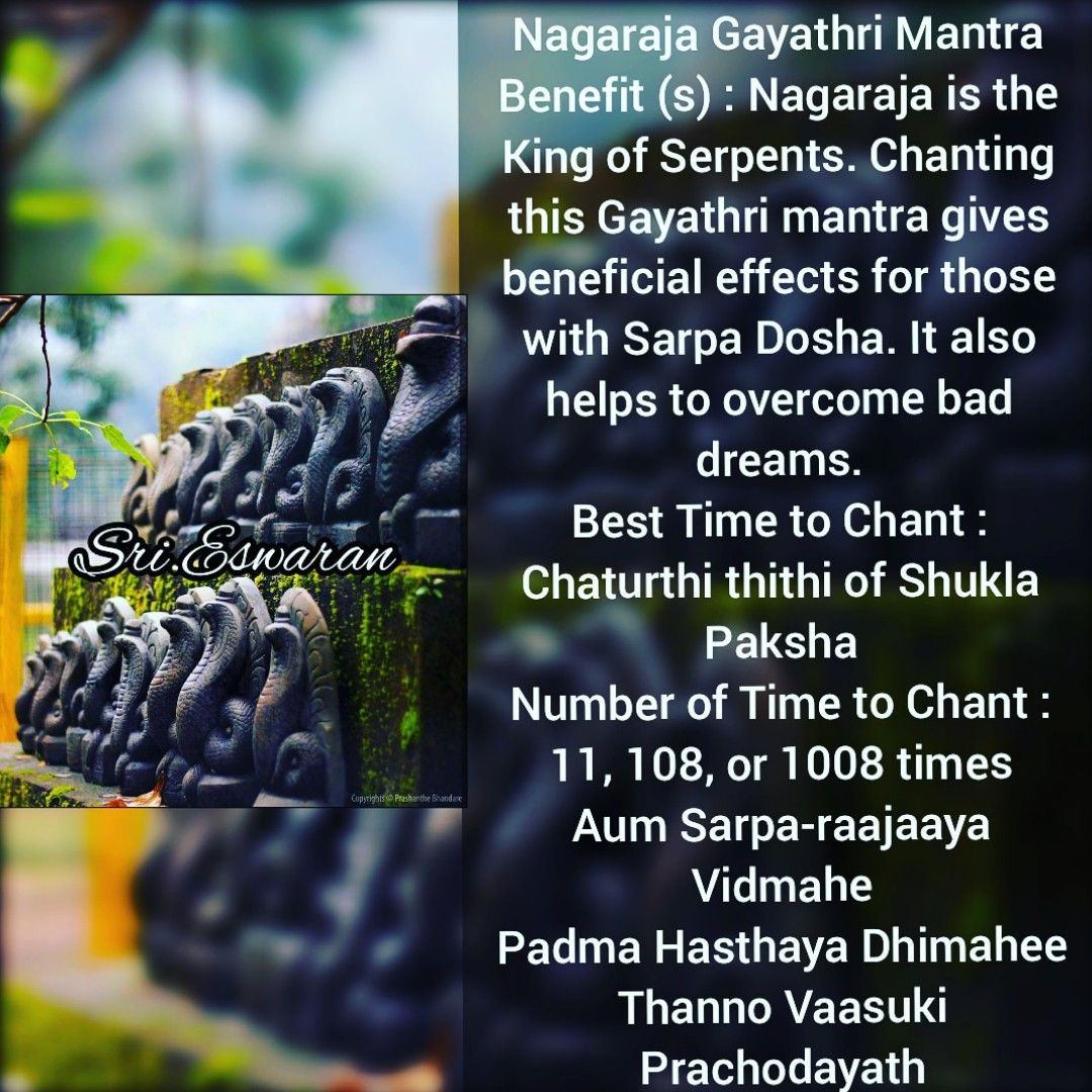 Nagaraja Gayathri Mantra Benefit (s) : Nagaraja is the King of
