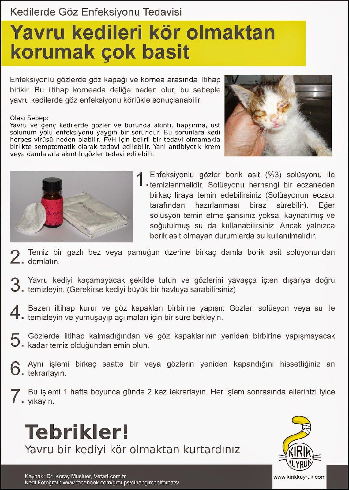 Taras Bulba: çalışma türü ve özellikleri