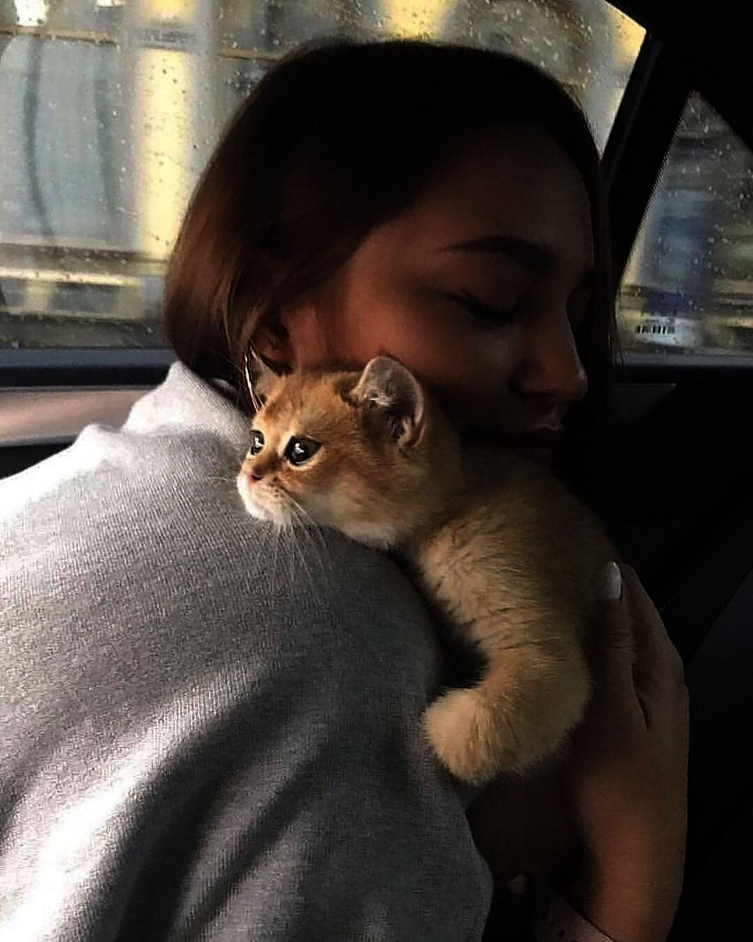 Cute Cat Good Morning Pictures Not Cute Animals Status Video Download Round Cute Cat Crying Gif Before Cute Animals Playing Videos Cat Lovers Animals Cat Day