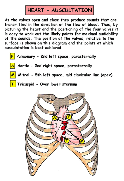 Auscultation of the heart positions for sexual health