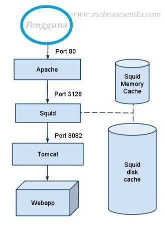 Arti Squid Cache, Cara Kerja dan Kegunaannya Secara Umum | Internet