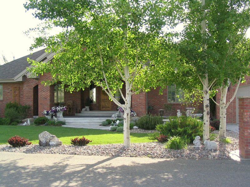 Small Trees For Front Yard Google Search Landscaping 640 x 480