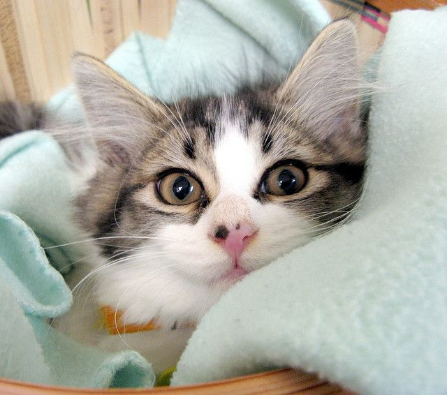 my kitten Charlie