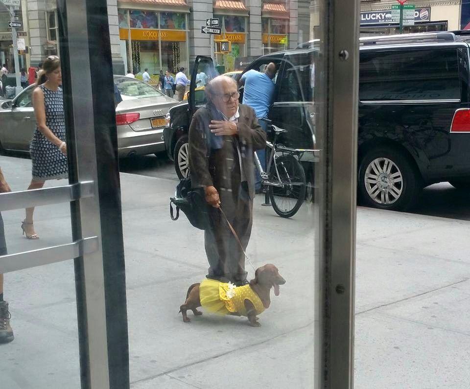 Credit Reddit Dachshund Owner Wiener Dog Dog Died