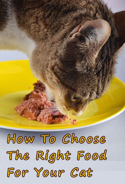 How To Choose The Right Food For Your Cat Cat Behavior Cats Animal Behavior