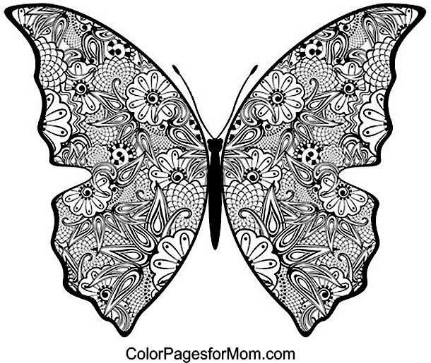 Butterfly coloring page 19 adult coloring pages for Coloring pages of butterflies for adults