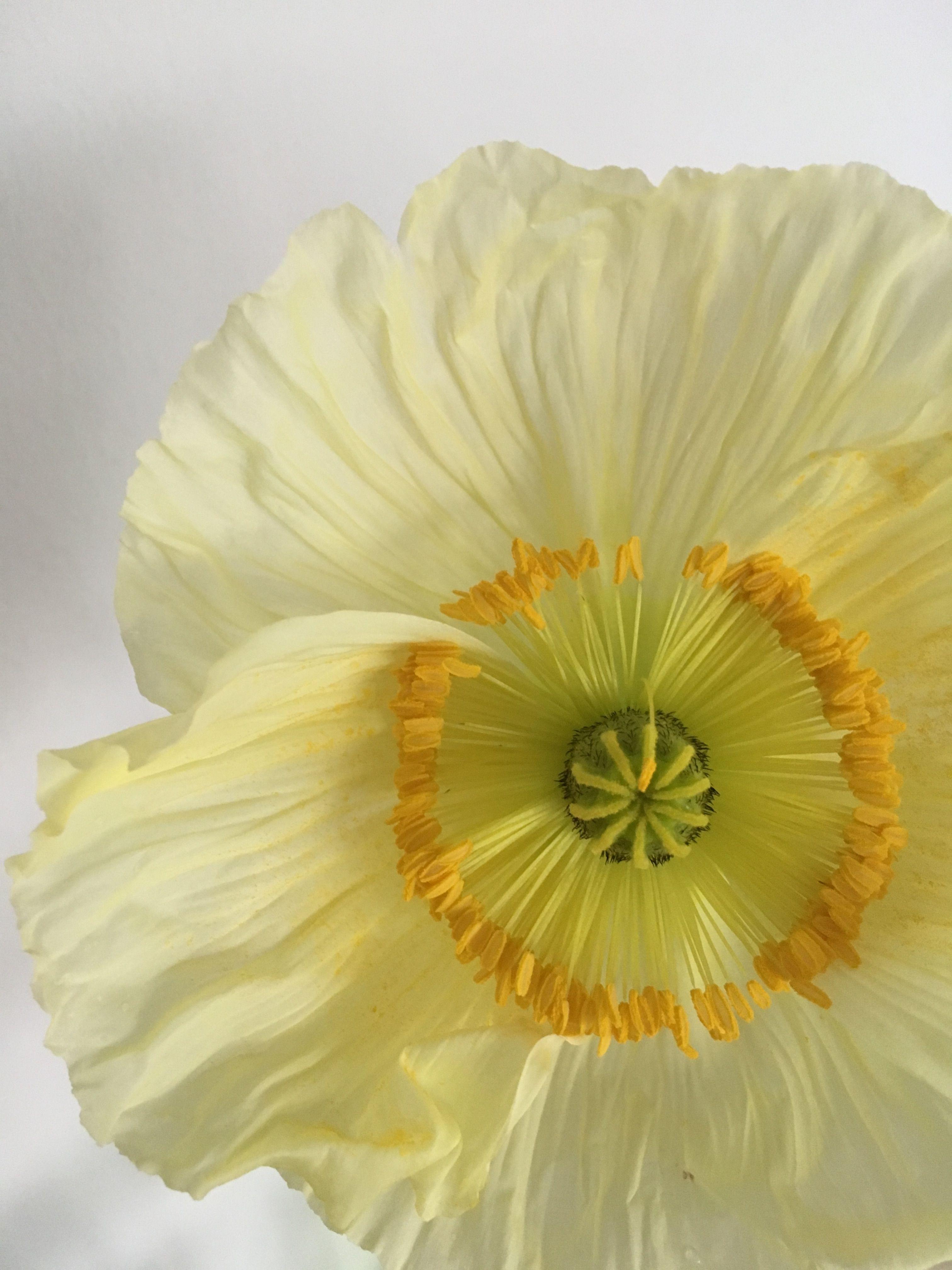 Rosa S Fotos Bild Von Rosemarie Stosser Mohnblume Blumen Mohn