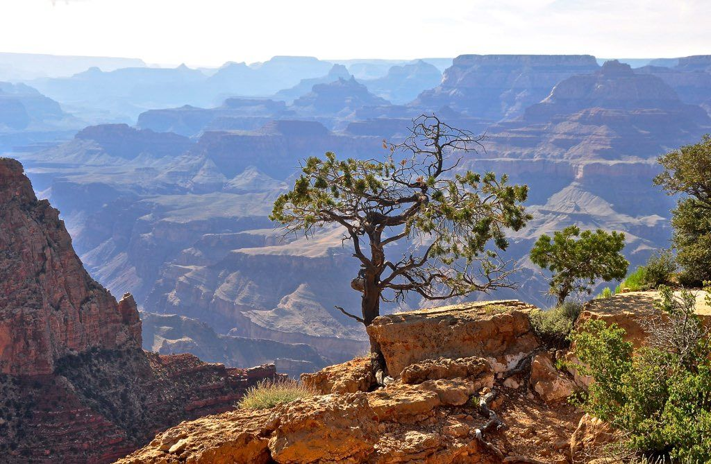 lone tree Grand Canyon | by tonnyc