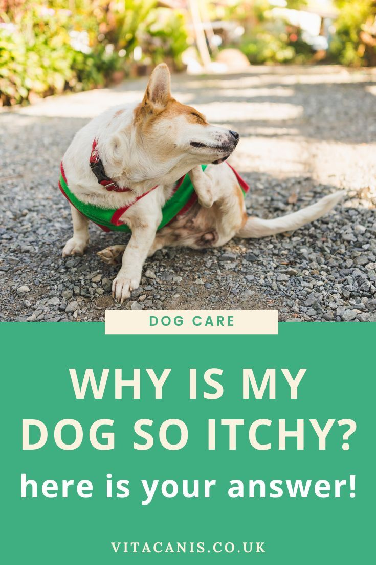 5 TOP possible reasons your dog is itchy Dog care, Dog