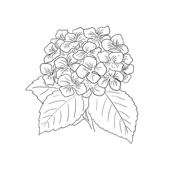 Simple Hydrangea Print For Simple And Easy Wall Art Etsy Hydrangea Print Simple Hydrangeas Flower Drawing