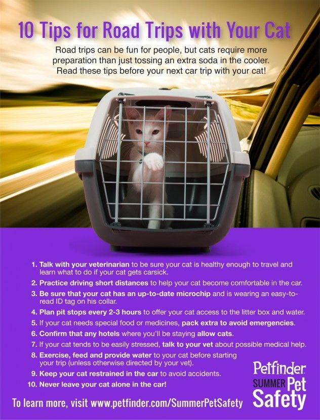 Road trips can be fun for people, but cats require some preparation. Read these 10 tips before your next car trip with your cat!