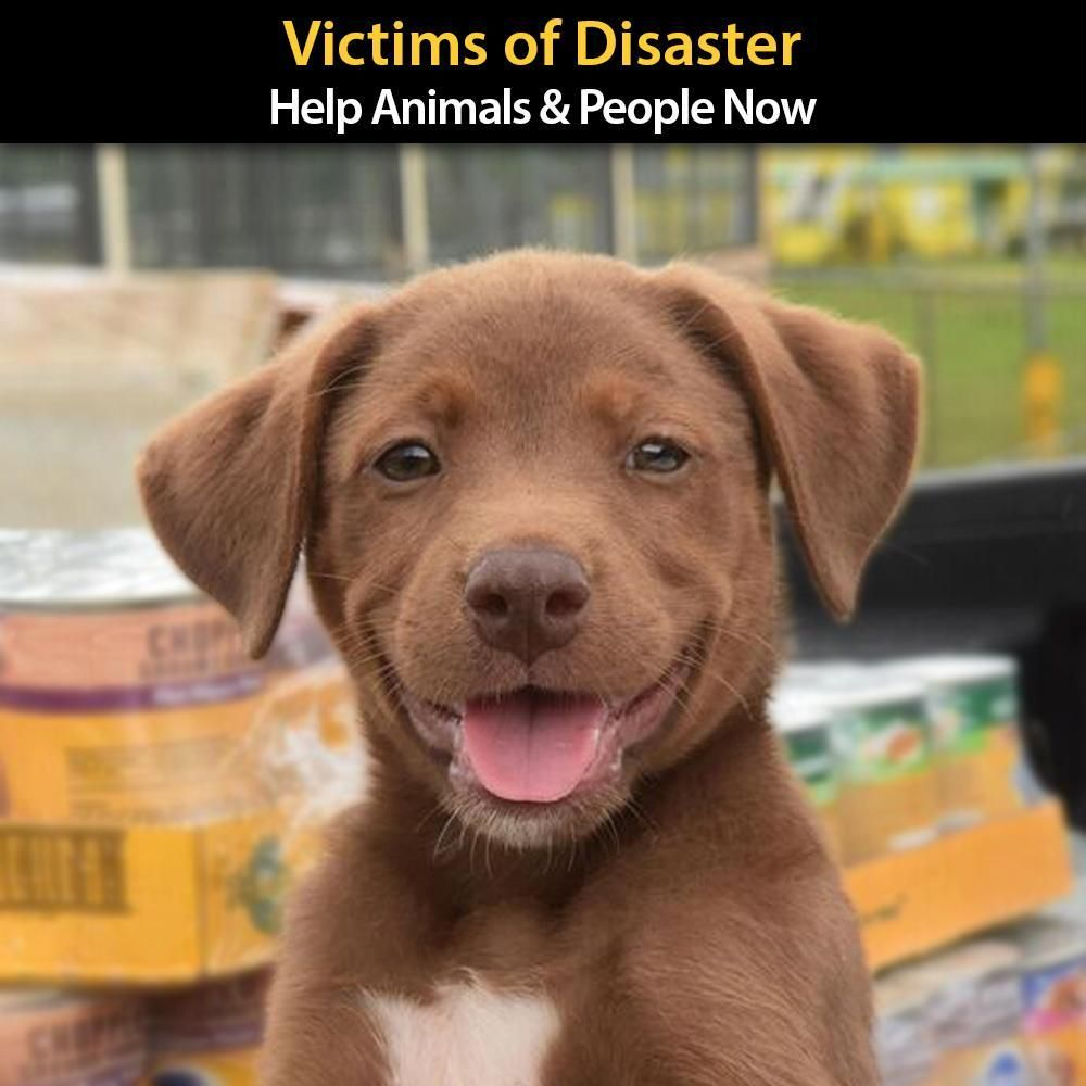 Urgent Help Send Supplies to Victims of Disaster Dog