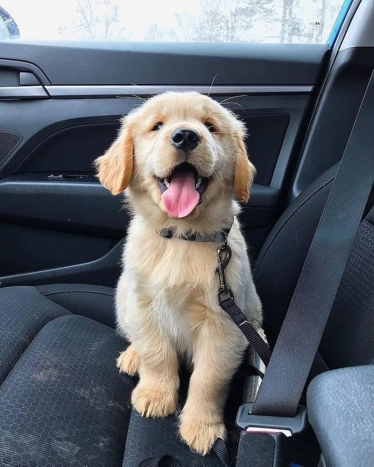 Photo of 7 cutest dog breeds in the world – dogs – #the #dogs #dog breeds # cutest # ……
