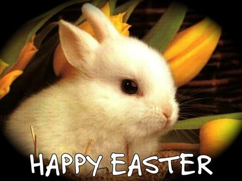 Image result for happy easter cute animal