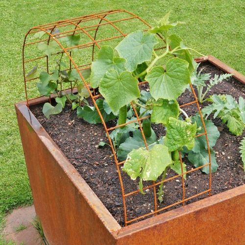 Rankhilfe zum Ziehen von Gurken, Kletterpflanzen, uvm. Eignet sich perfekt für Hoch- und Bodenbeete. #kräutergartenpalette