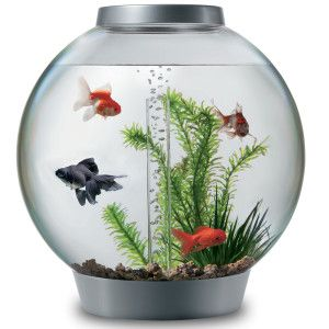 Biorb 8 Gallon Aquarium Kit Aquariums Petsmart Biorb Fish Tank Biorb Aquarium Kit