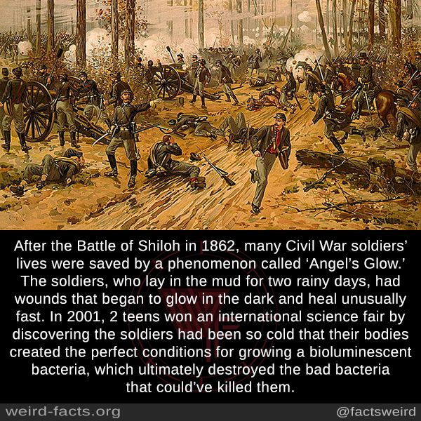 After The Battle Of Shiloh In 1862 Many Civil War Soldiers Lives Were Saved By A Phenomenon Called Angel S Glow The Creepy Facts Wtf Fun Facts Weird Facts