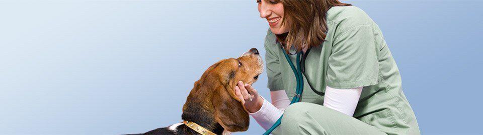 Pin on pet insurance