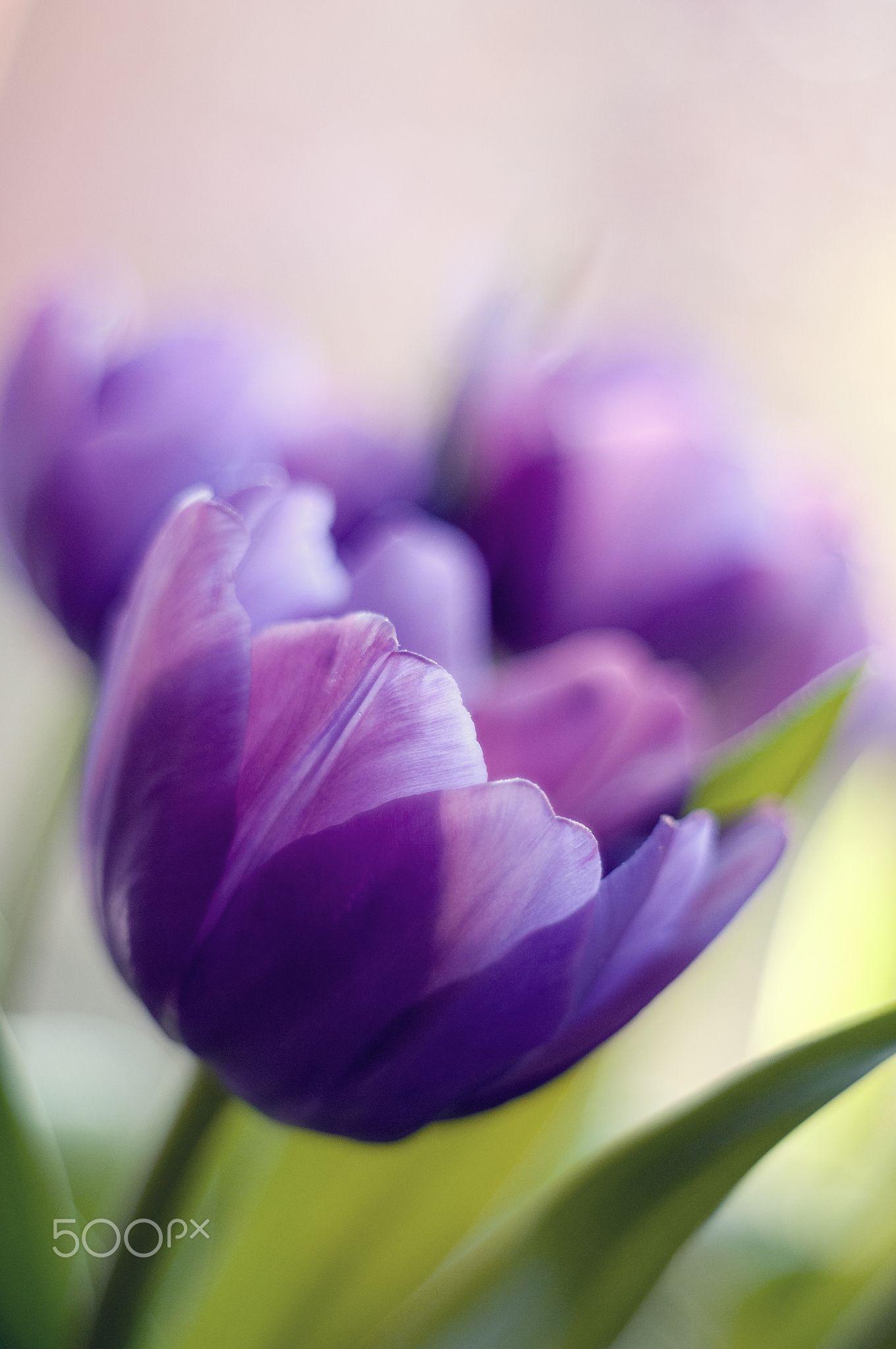 Blue purple null … Good morning flowers, Purple