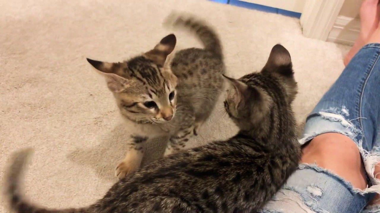 Big Cat Fight Youtube Cats Cute Cat Gif Cute Kitten Gif