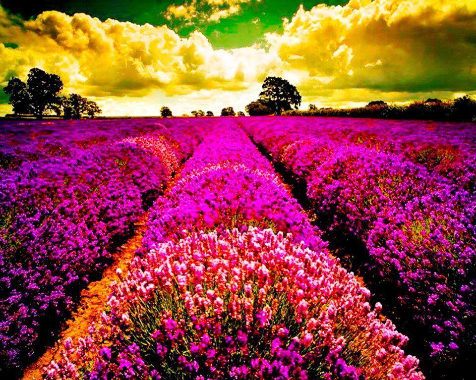 Pin de daisy santos en flores y paisajes paisajes flores - Fotos de rosas de colores ...