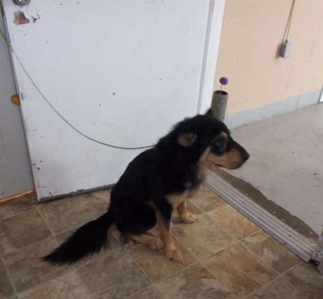 Adopt Sydney On Animal Shelter Dog Adoption Shelter Dogs