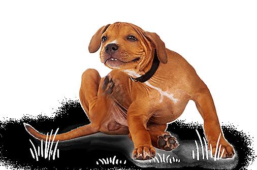 Pet Supplies, Pet Food, and Pet Products Petco Pets