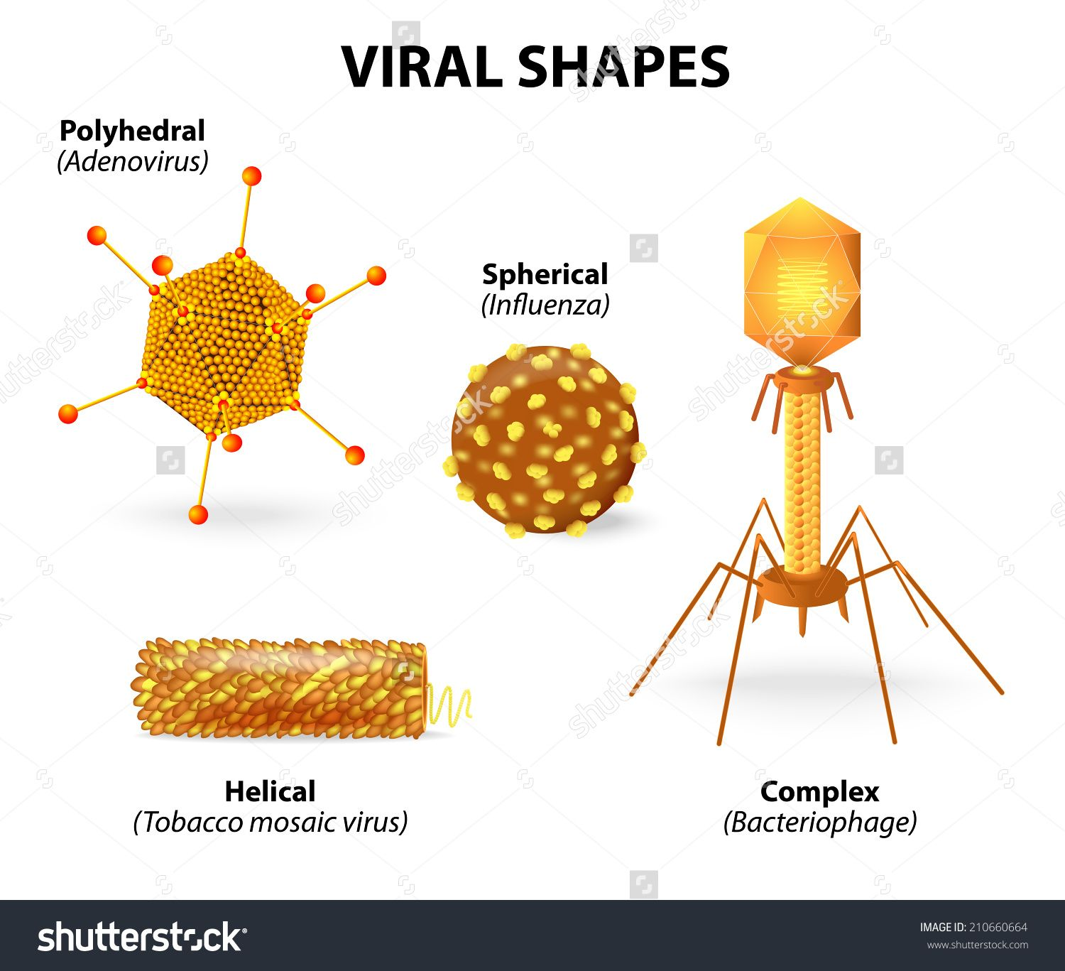 Viral Shapes Vector Illustration Showing That There Are Many