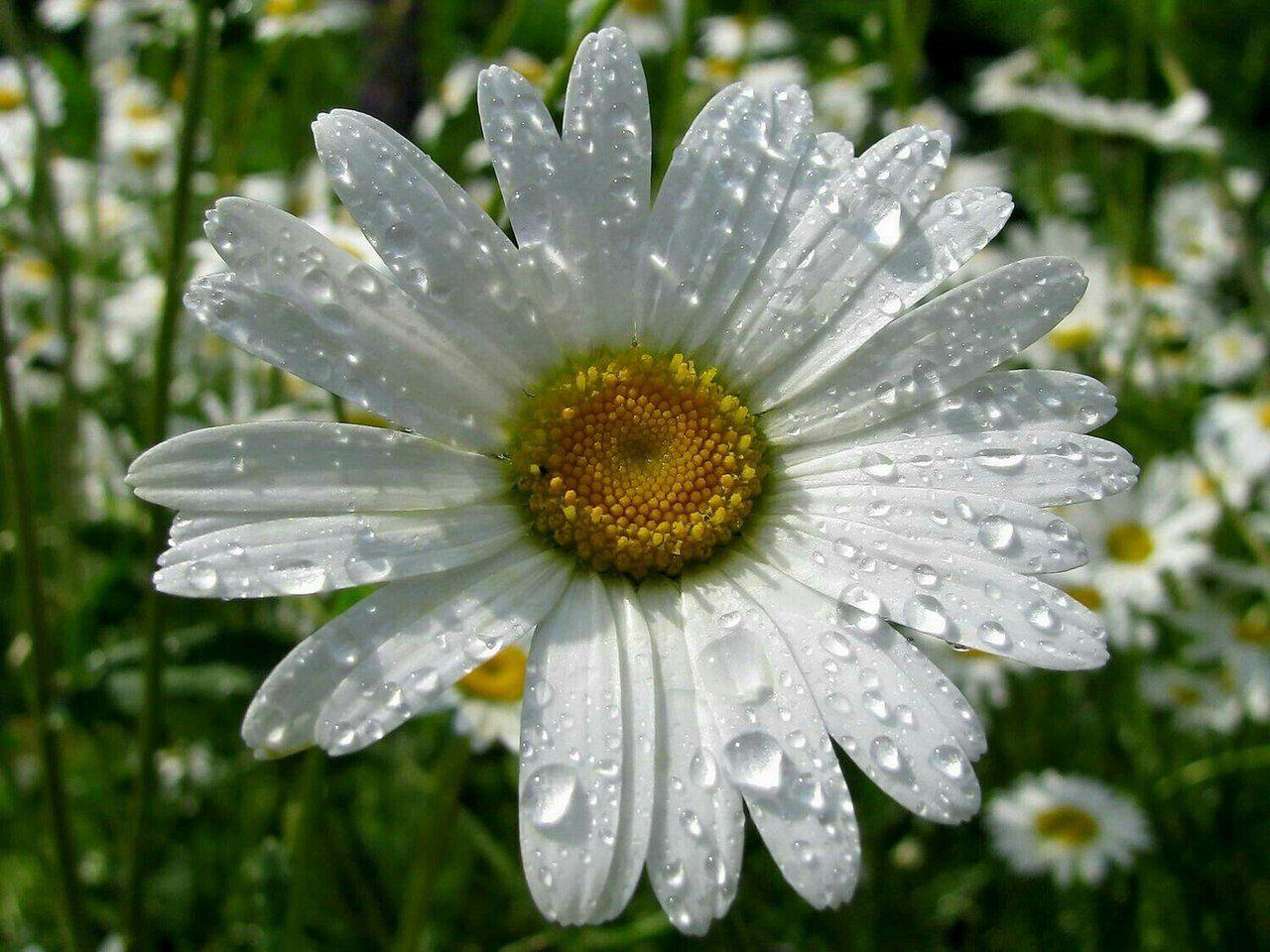 Картинки на аву летние цветы