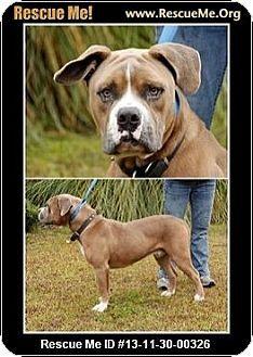 Savannah Ga Bulldog Mix Meet Riley A Puppy For Adoption