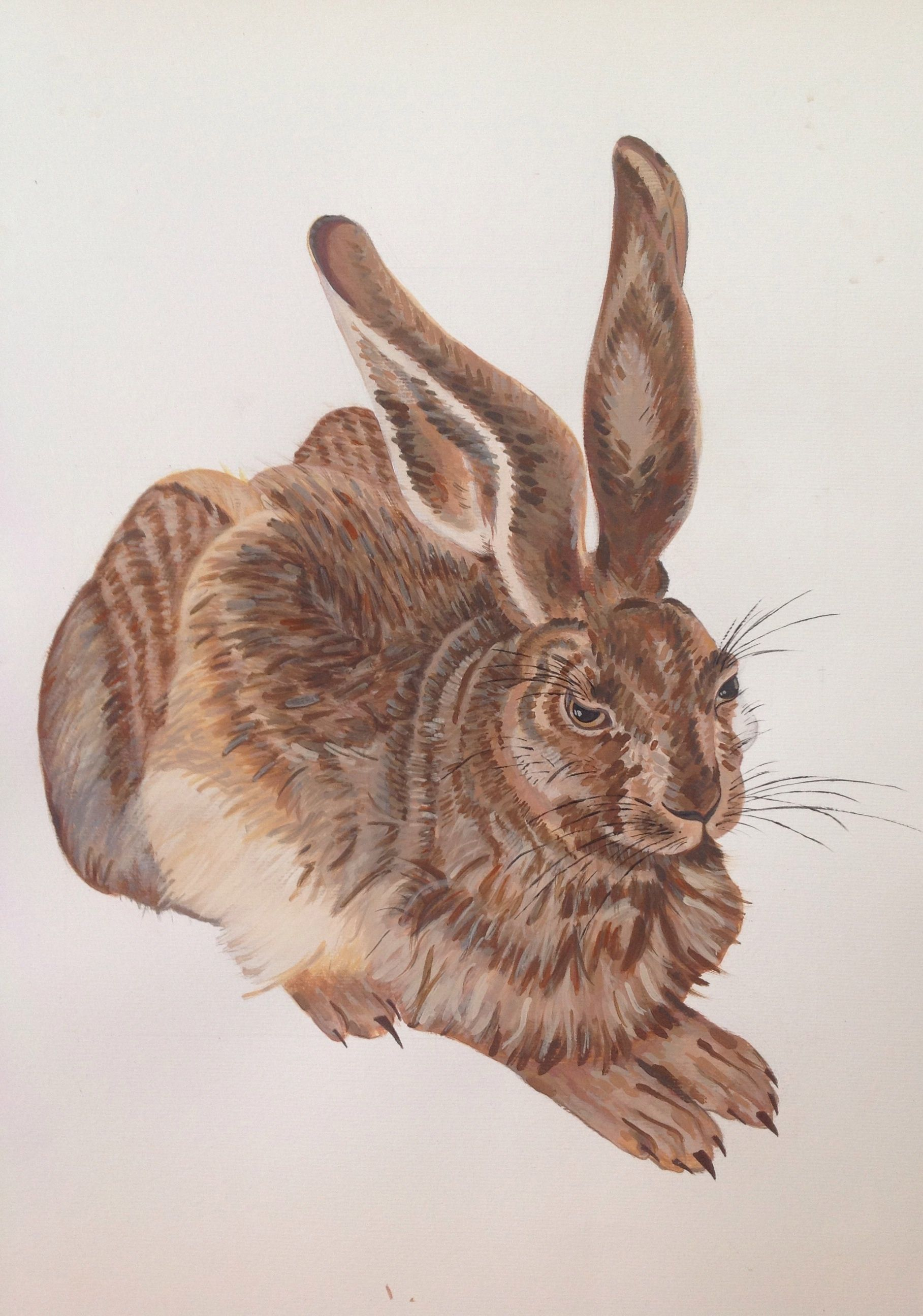 Estudo coelho inspirado em Dürer