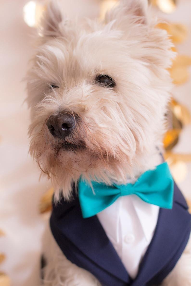 Wedding Tuxedo For Dogs Formal Dog Tuxedo Harness Blue Navy