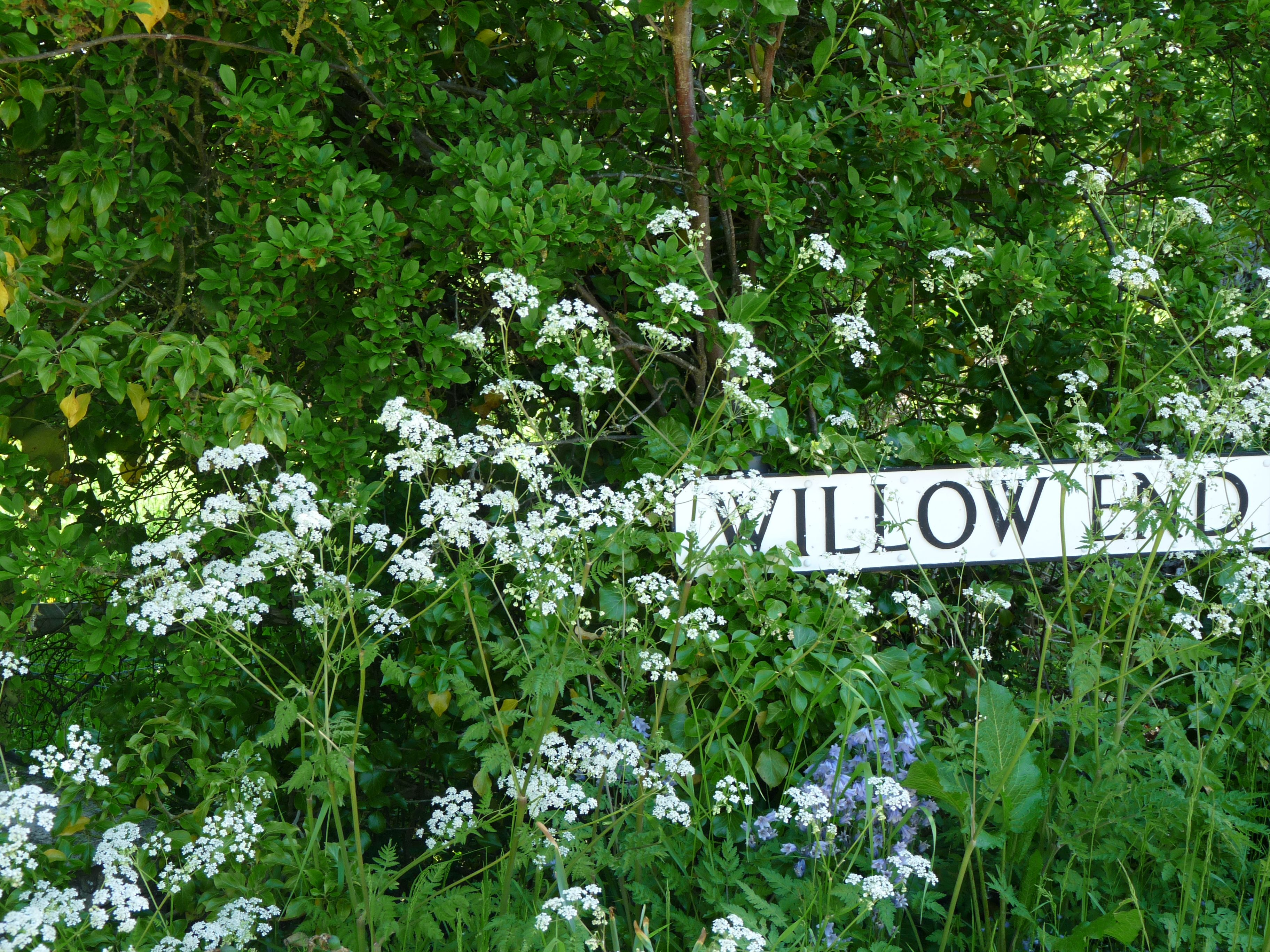 ♔Willow end ~ love the memories...♔..