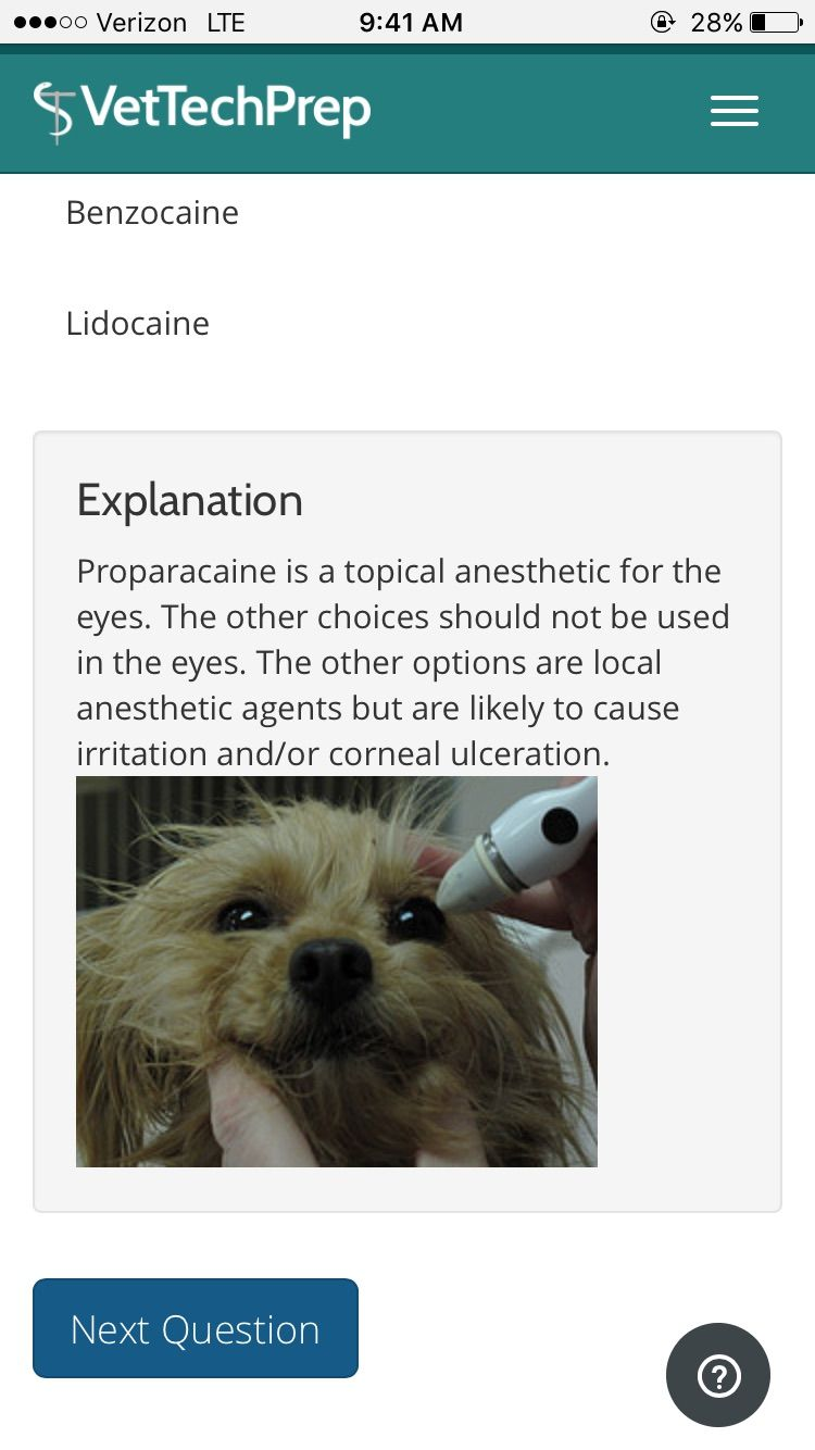 Pin by Sierra Wurn on vet tech (With images) Dog anatomy