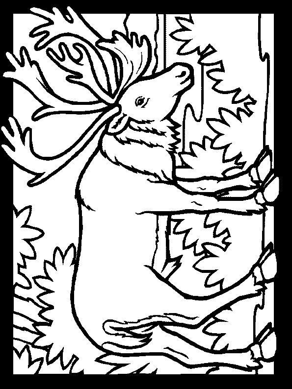 Desenhos para colorir Animais 191