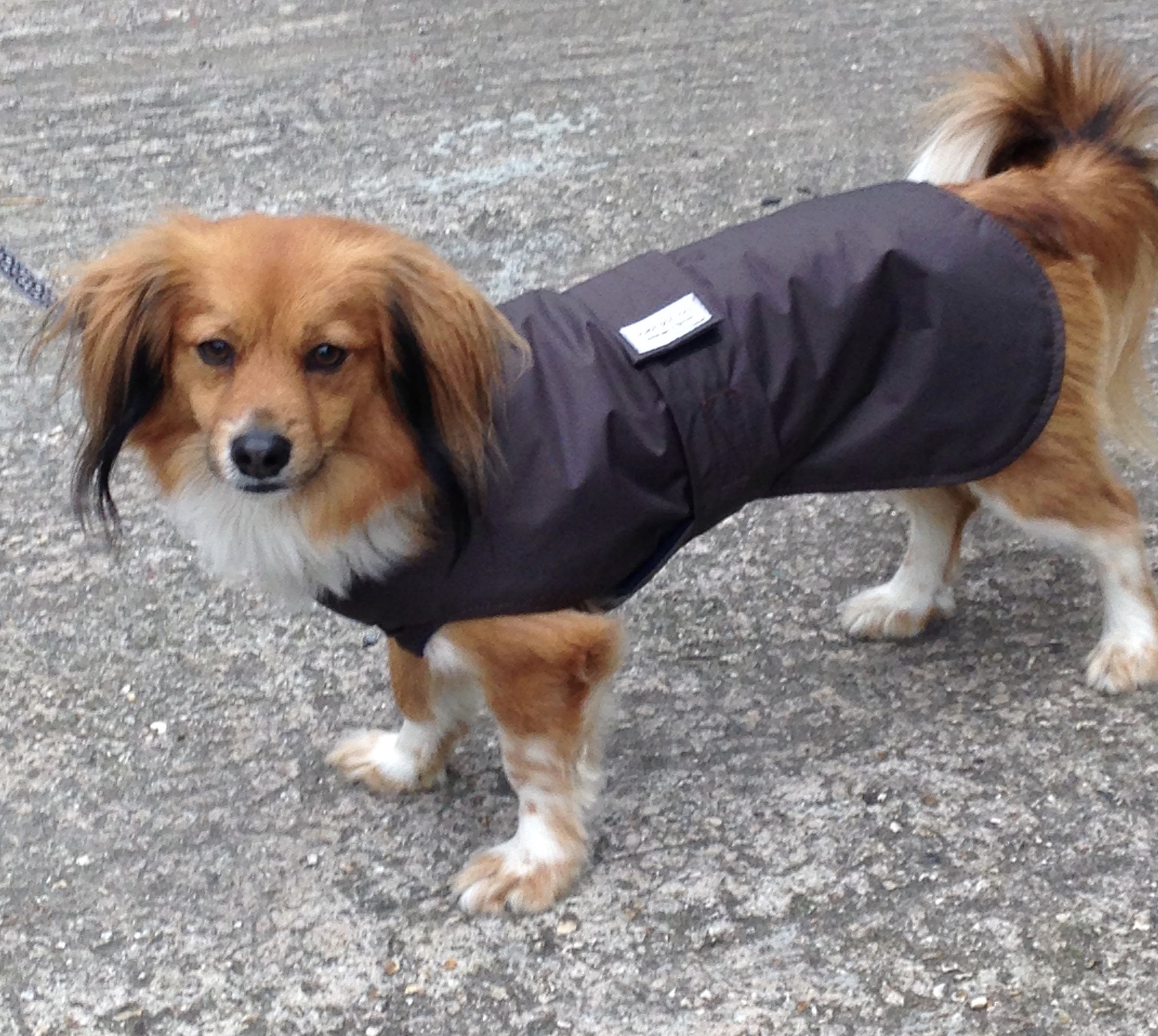 Not Only A Coat To Work With A Harness But An Underbelly Coat