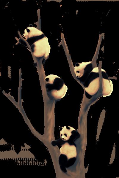 panda tree1b 100%